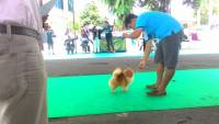 Veterinary Students' Organization Conducted Veterinary Dog Festival