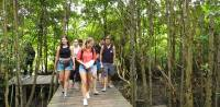 Community Services to Mangroves: Introducing  Sustainable Tourism through Mangrove Forests